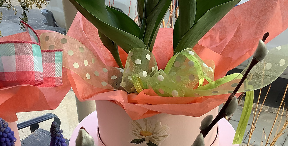 Spring Tulips in Hatbox