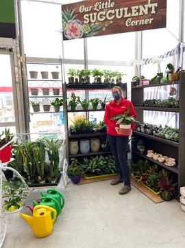 Succulent Corner.jpg
