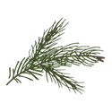 Pine%2520Spruce%2520Branches%25208_edite