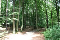 Buchenwälder im Ruppiner Land