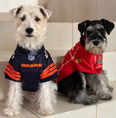 TwoDogs_Jerseys copy.JPG