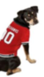 DogInHockeyJersey_Red copy.JPG