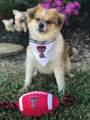 Dog_Texas Tech.JPG
