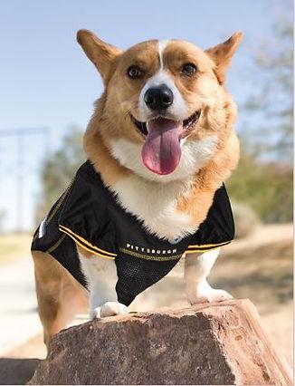 Dog In Jersey_BlackYellow.JPG