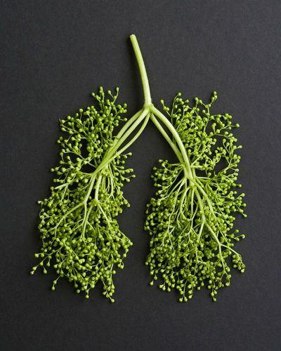 Medicinal Herbs for Respiratory Health