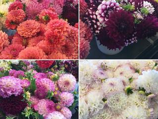 A Florist's Dream Come True!