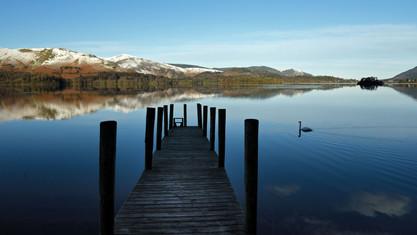 Swan on the lake.jpg