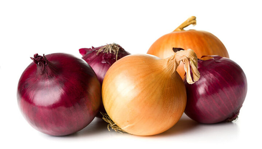 The Common Onion, The humble Healing Herb