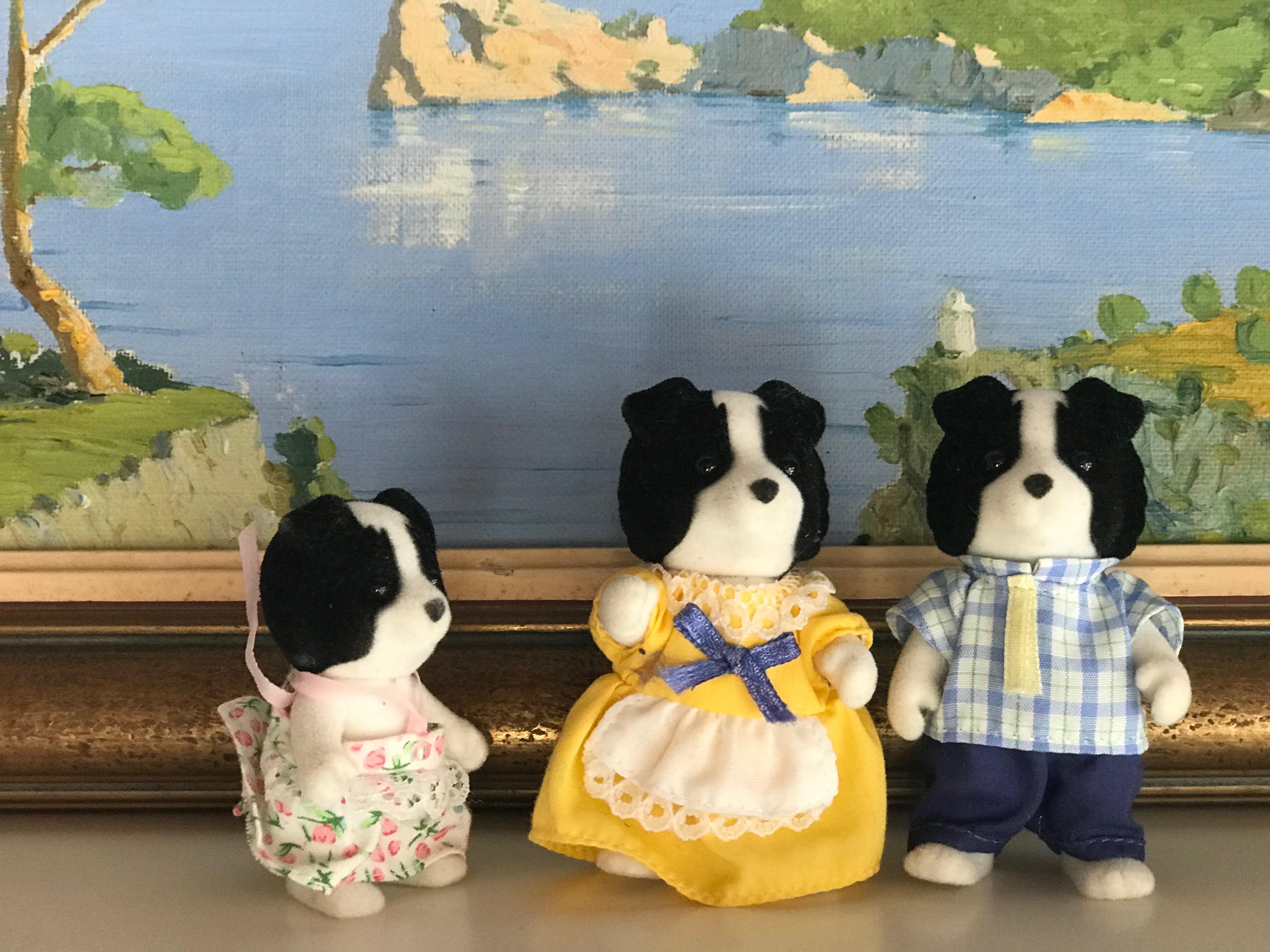 A Border Collie Family