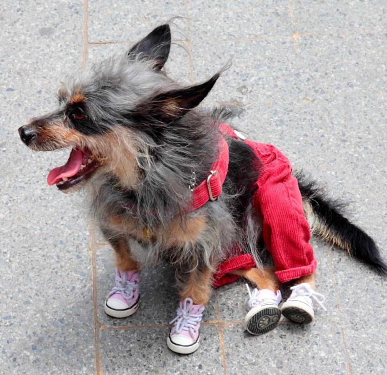 A friend´s dog!