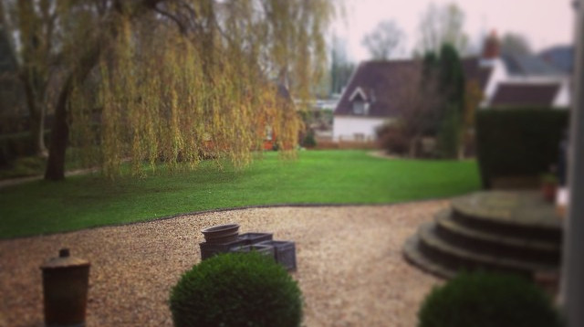 Perfect Lawns and willow tree
