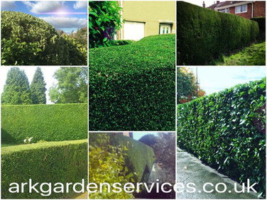 Hedge cutting and shrub pruning