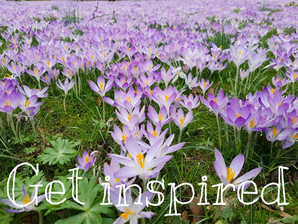 Get inspired... enjoy your garden