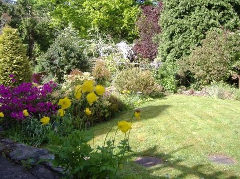 Garden maintenance in St Julian's Newport