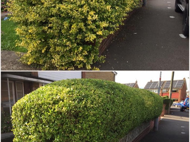 Hedge Trimming, Lliswerry Newport