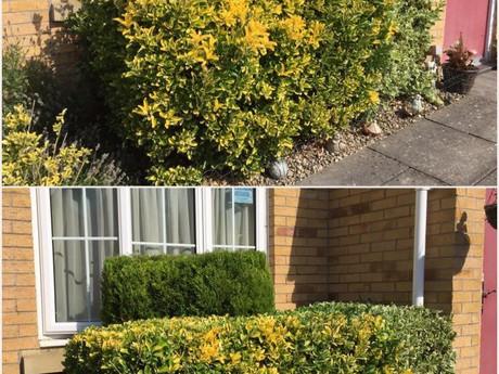 Hedge Trimming, Duffryn Newport