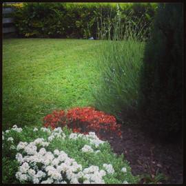 Garden Maintenance Bassaleg Road Newport