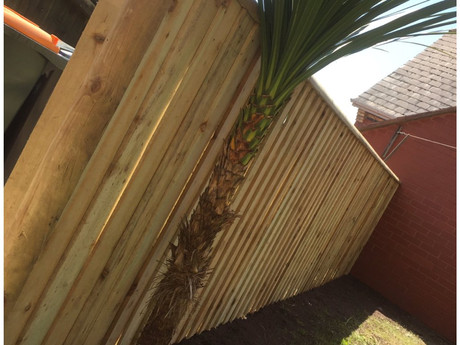 4ft feather edge fencing