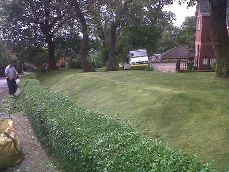 Hedge trimming in Henllys Cwmbran