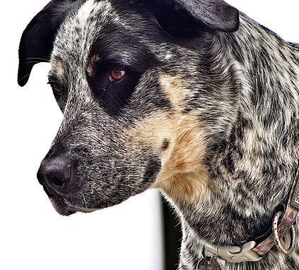Dog rescue bc