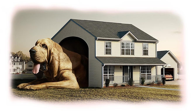 Big dog - house.jpg