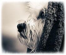Dog 14.jpg