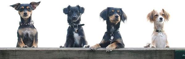 Dog 12.jpg