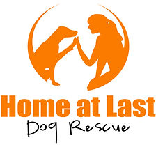 dog rescue bc surrey vancouver