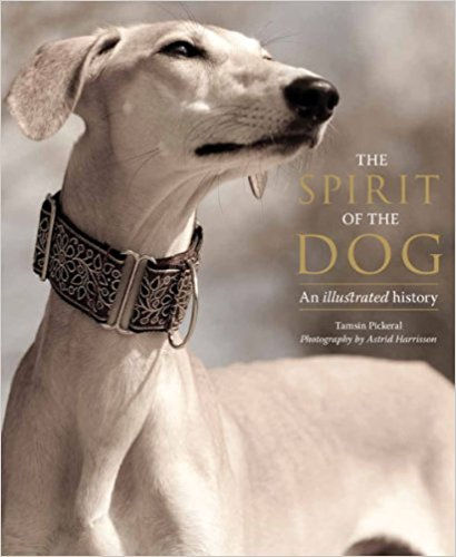 Shisha of jbridgebacks was selected to represen the breed on the book the spirit of the dogs