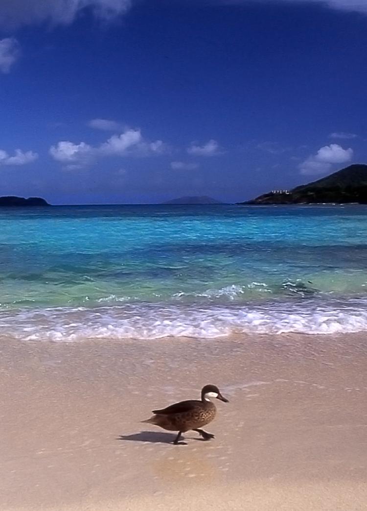 Sapphire Beach, St. Thomas.jpg