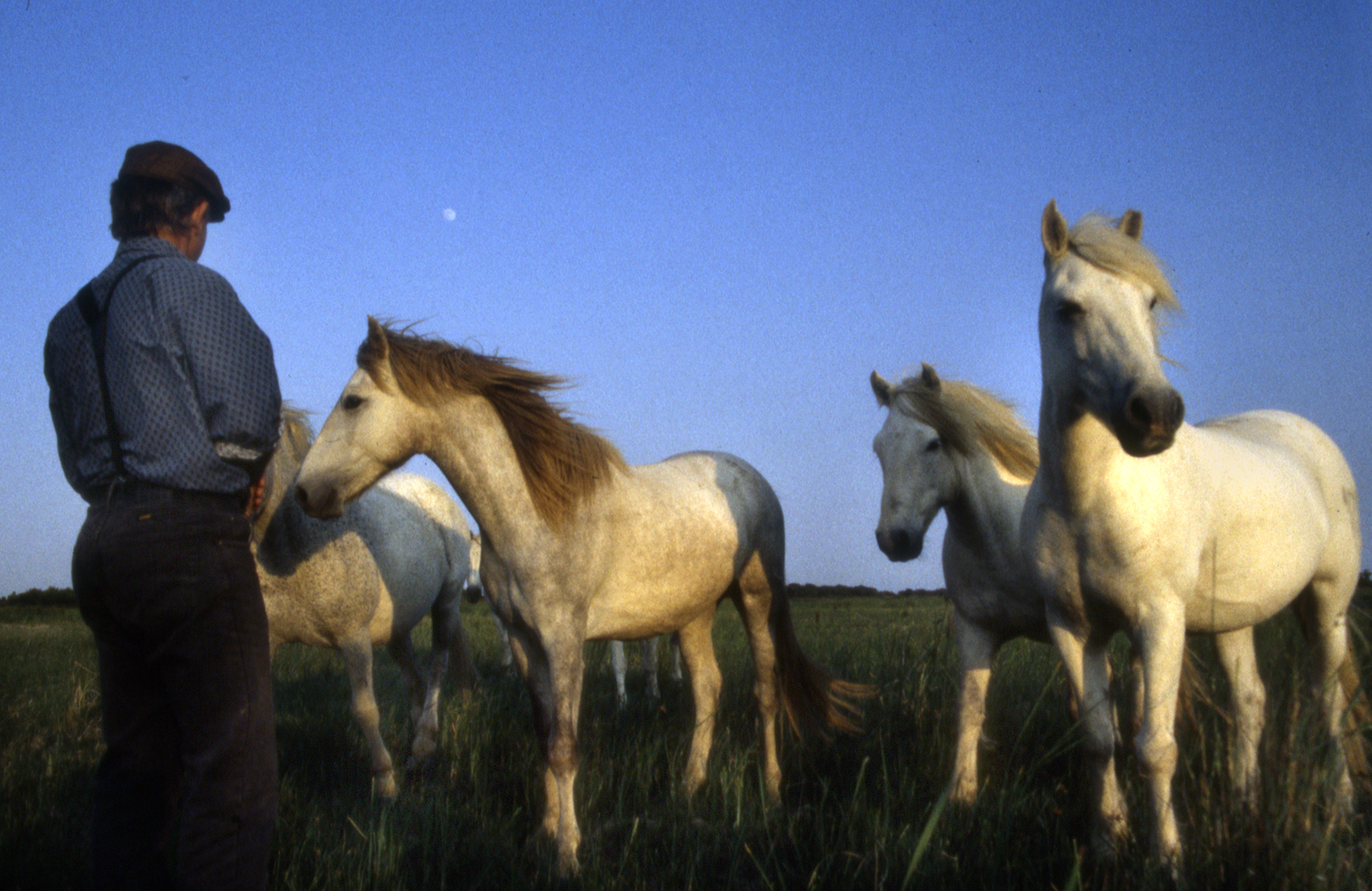 Horse Whisperer, Les-Saintes-Maries de-la-Mer, France.jpg