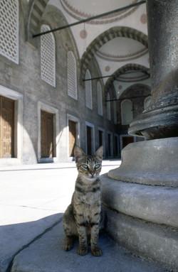 Blue Mosque, Istanbul, Turkey.jpg