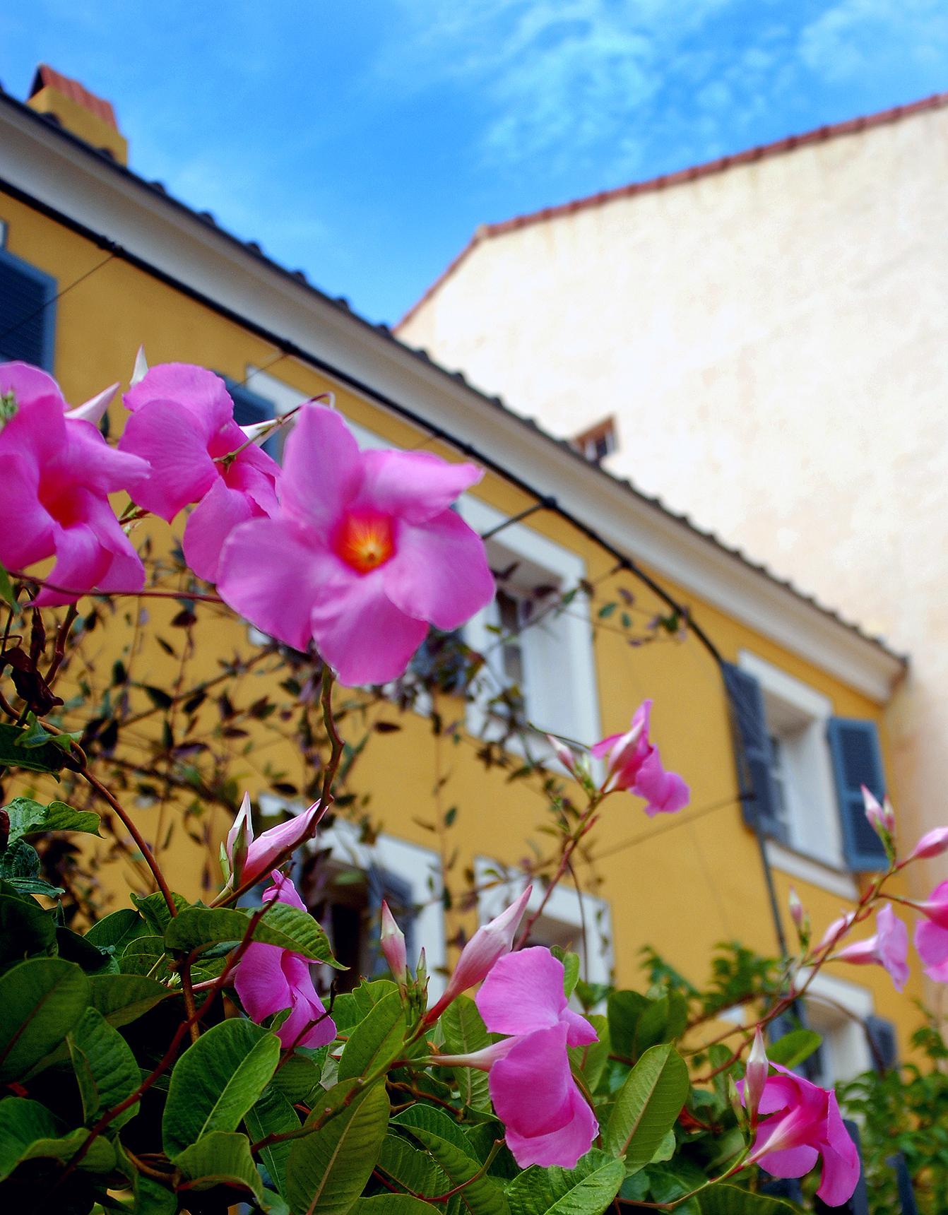 Flowers, Ajaccio, Corsica.jpg