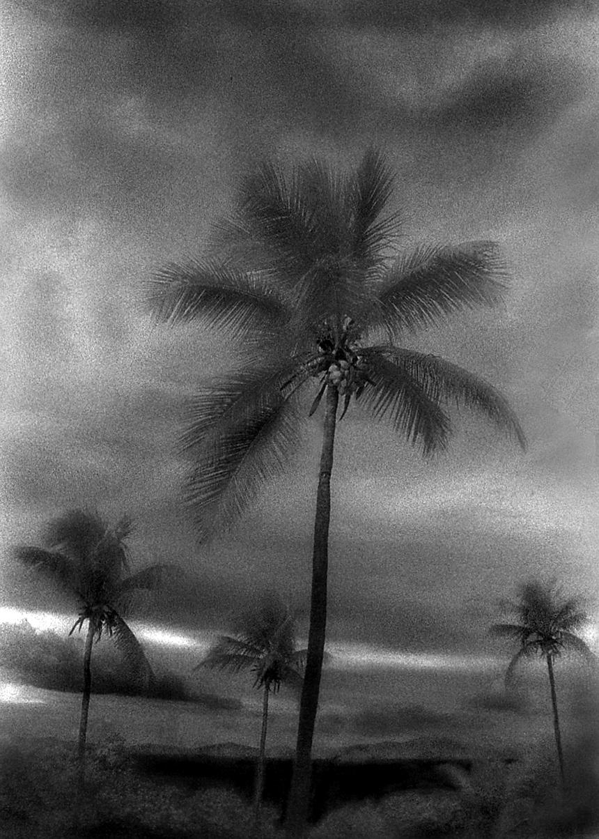 Coconut+Palms,+St.+Thomas,+USVI.jpg