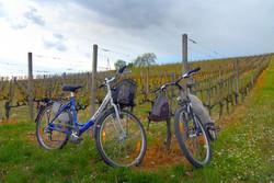Bicycles, Switzerland.jpg