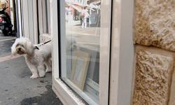 Dog, Corsica.jpg
