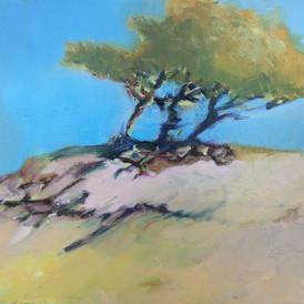 Ikonisk træ på Tisvilde strand