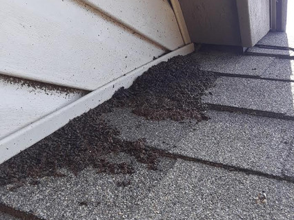 Bat Guano coming out of a Bat entry poin
