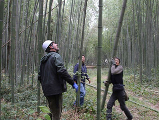 Bamboo 1: structure