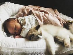 This little fellow guarding his new-born friend 😍 all cats can learn to live with kids 😍 thank you