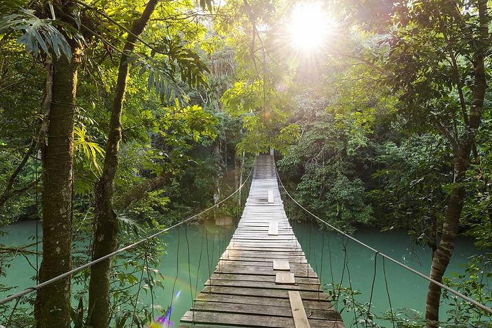 Belize_Jungle.jpg