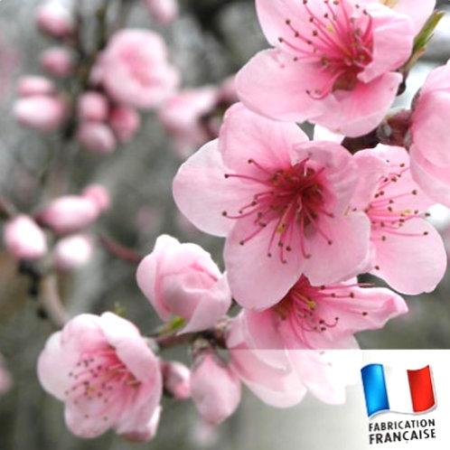 Bonbonnière bougie Fleurs de cerisier