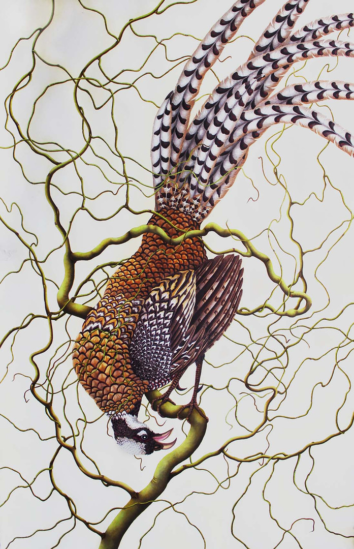 Pheasant and twisted willow