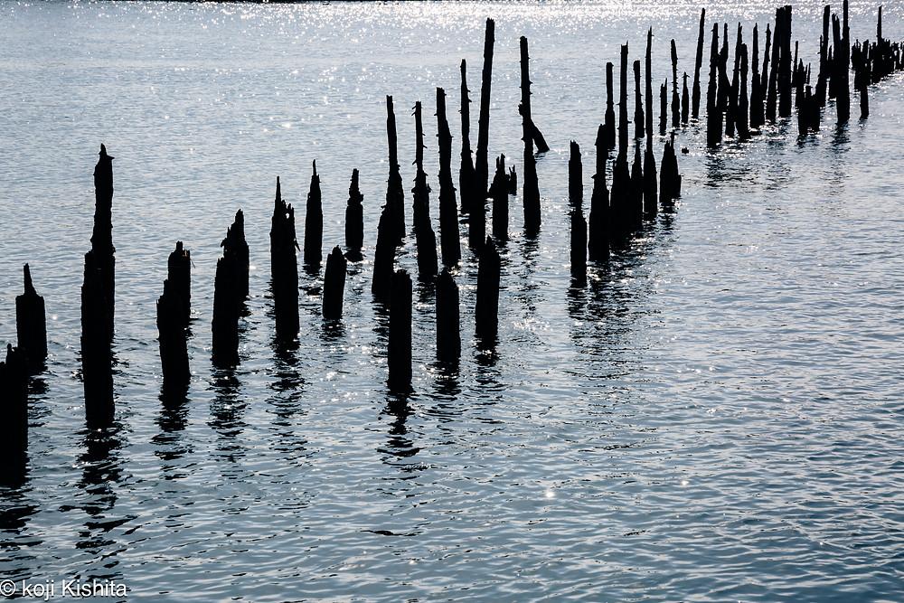 馬込川河口に残る杭