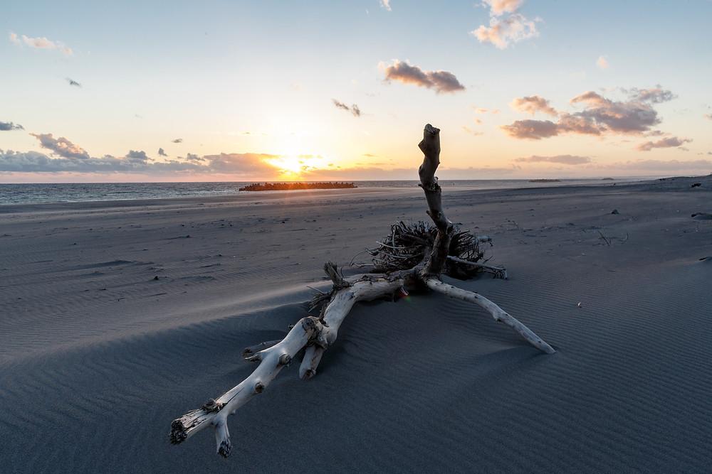 流木と夕日