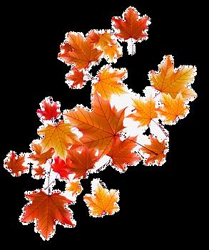 1559811-autumn-leaves-fall-defoliation-a