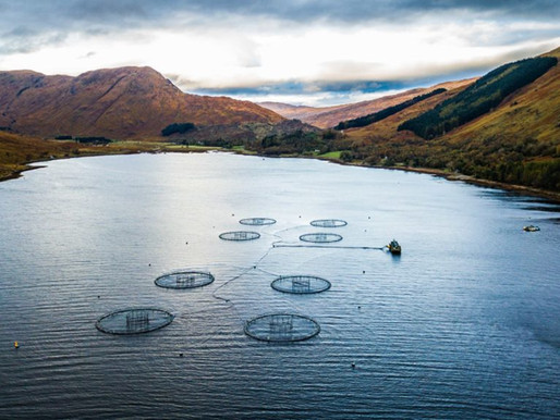 The Importance of Biological Monitoring in Aquaculture