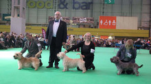 Stiubhard wins BOS at CRUFTS 2016