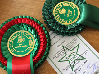 Celtic Winners All Breed International Dog Show in Dublin