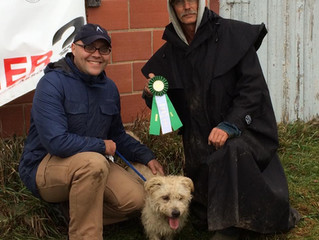 Stiubhard Pebbles earns her Junior Earthdog title in Iowa!